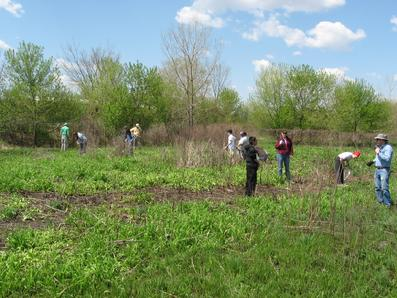In April and May 2009 Eagle Scout candidate Mike Aldas lead Boy Scout Troop 22 and his volunteers in restoring the natural plants at the St Stephen cemetery and prairie along the GWT approx. 1/2 mile west of Schmale Road in DuPage County.